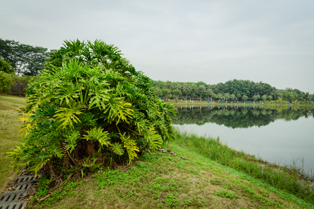 lake park scenery 写真素材