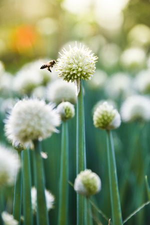 bee sucking nectar from a flower 写真素材