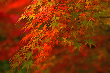 秋の紅葉 写真素材 - 42047998