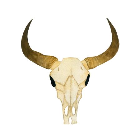 Ilustración aislada sobre fondo blanco. Cráneo de acuarela de un toro. Ilustración de la mano de acuarela. Foto de archivo