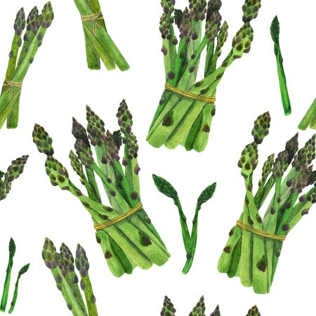 Asparagus sprouts on a white background watercolor pattern. Manual illustration of vegetables. For design and printing on fabric and paper. Фото со стока