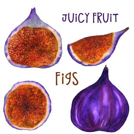 Bright watercolor figs on a white background. Manual isolated illustration. For printing on fabric and paper.