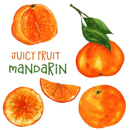 Set of watercolor tangerines in different variations. Watercolor mandarin on a white background. For design and printing on fabric and paper.