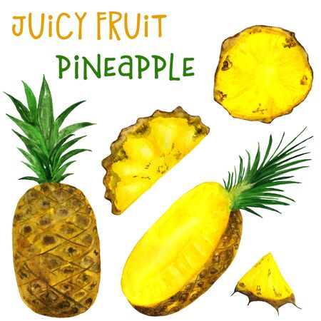 Watercolor pineapple drawing on a white background. Handmade illustration of juicy fruits.
