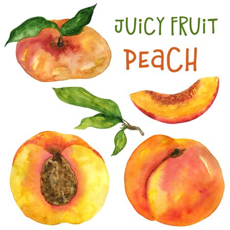 Watercolor peach, nectarine and fig peach isolated illustration on white background. Hand drawing fruits and leaves. For the design of postcards, menus, textiles and more.
