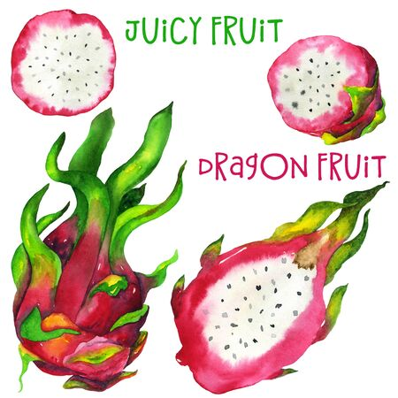 Watercolor dragon fruit set from different angles. Hand drawing in high quality. For the design of stationery, textiles, stickers, postcards and more.