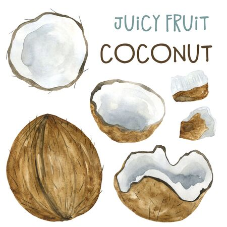 Watercolor drawing coconut and pieces of coconut. Isolated illustration on a white background. For printing and design on fabric and paper.