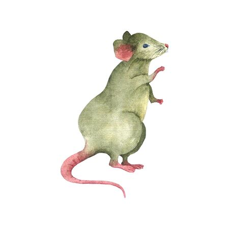 Watercolor drawing mouse stands on its hind legs. Hand illustration symbol of the new year 2020. For printing on fabric, notebooks, home decor, postcards. Stock Photo