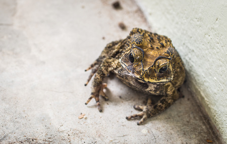 Toad sitting on the concrete floor