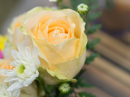 close up orange rose Orange rose with white chrysanthemum Banco de Imagens
