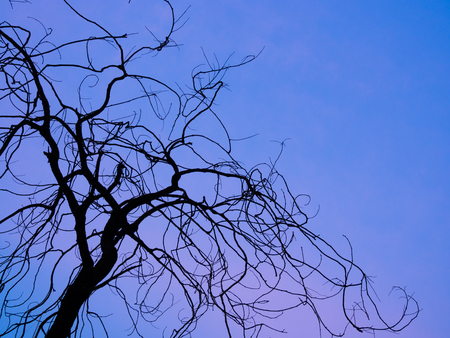 dry branches silhouette at blue sky background Banco de Imagens