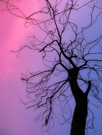 dry branches silhouette at sunset