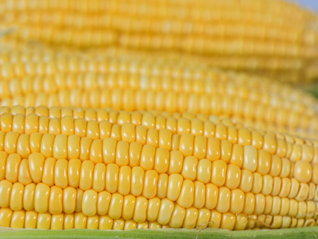 yellow sweet corn,close up