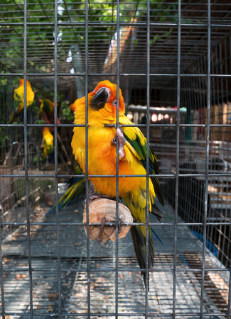 colorful conure parrot in cage