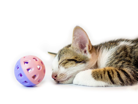 kitten sleeping with plastic ball,isolate on white background