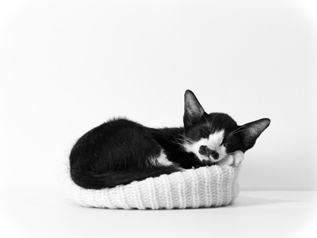 close up,black and white kitten ,isolated on white background Banco de Imagens