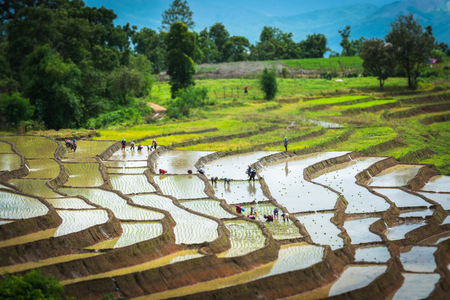 Terraced rice field in rainy season