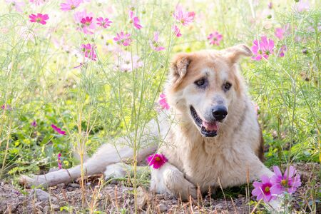 Blurry dog and flower for background