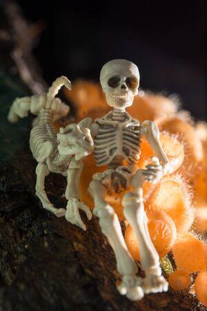 Skeleton sitting with his dog in the woods Zdjęcie Seryjne
