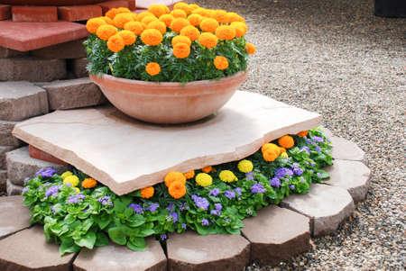Marigolds Orange Color (Tagetes erecta, Mexican marigold, Aztec marigold, African marigold), marigold pot plant. Фото со стока