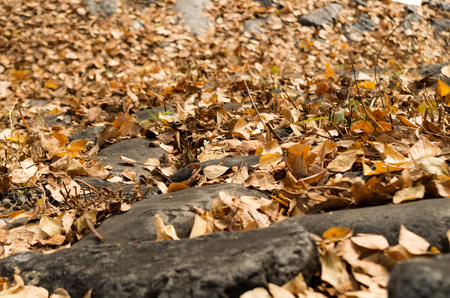 dode bladeren: Gevallen bladeren