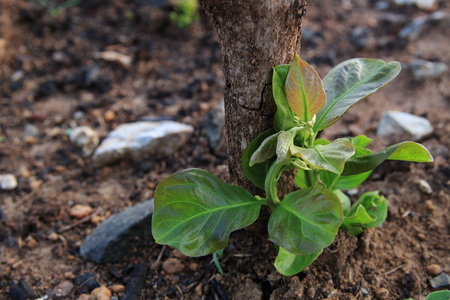 wildfire: Plants growing up after wildfire as a newborn.