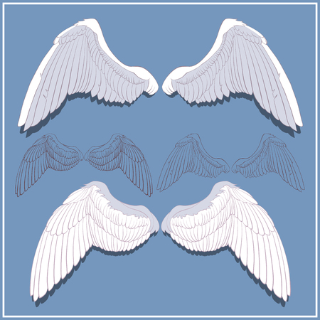 pinion: Graphic wings. Front and rear side. Hand-drawn. White and contour.