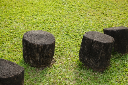 stump seats in the park photo