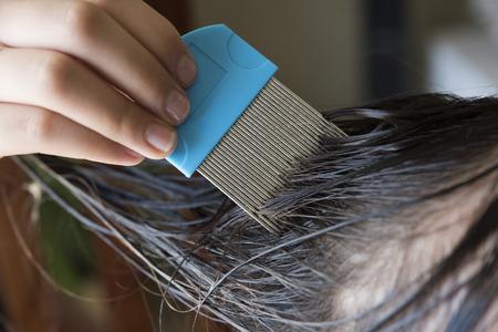 piojos: una chica que está haciendo las liendres y los piojos de la cabeza peinado, cerró con un alza