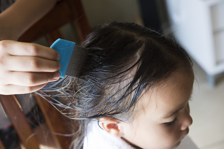 nit: a girl is doing nits and head lice combing, closed up shot. Stock Photo