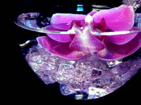 orchid and pink crystal in wine