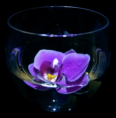 violet orchid is in wine glass Stock Photo