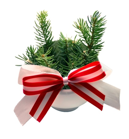 a little fir-tree branches is in a white cup and a red bow