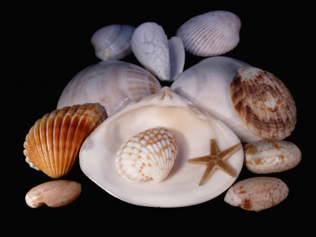 Group of sinks of mollusks and starfish on a black background