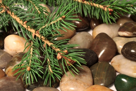 Fir-tree branch on sea pebbles Stock Photo