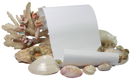 Pure sheet of paper, coral and group of different sinks of mollusks