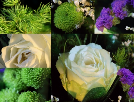 Set of photos of white roses, lilac and green flowers and grass