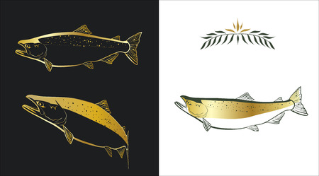 Three stylized sketches of a salmon made with gold and dark green colors on white and black background. Contour of a fish and a fill can be easily separated from a background. Vector