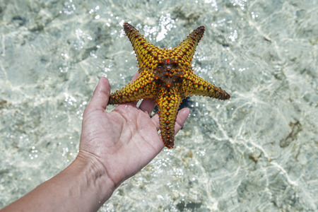 starfish on the hand 스톡 콘텐츠