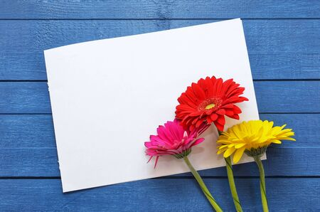 Mock up artwork for celebration, drawing and text on a blue wooden background with three colored flowers gerberas.Flat lay.Creativity concept. Empty sheet. Close-up.