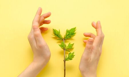 children's hands carefully protect the young spring twig with green leaves. concept protect nature recyclable zero waste close up