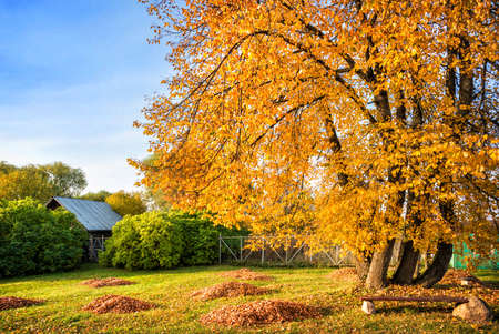 Autumn yellow tree and the roof of a wooden house near the monastery of the Life-Giving Cross in the village of Antushkovo, Ivanovo region Stockfoto