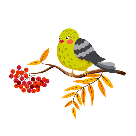 Bird sitting on a branch of a mountain ash. Autumn decorative illustration for postcard, book illustration, print. Vector. Illustration