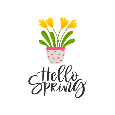 Spring background with flower in pot and inscription - Hello Spring isolated on white background. Vector illustration. Ilustrace