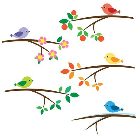 uccelli su ramo: Uccelli seduti sui rami diversi