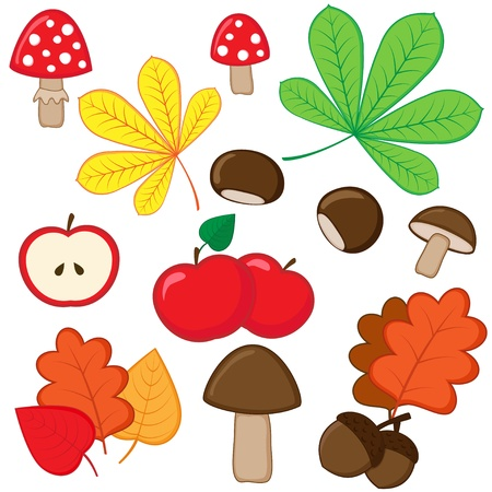 chestnuts: Set of autumnal nature elements on white background. Illustration