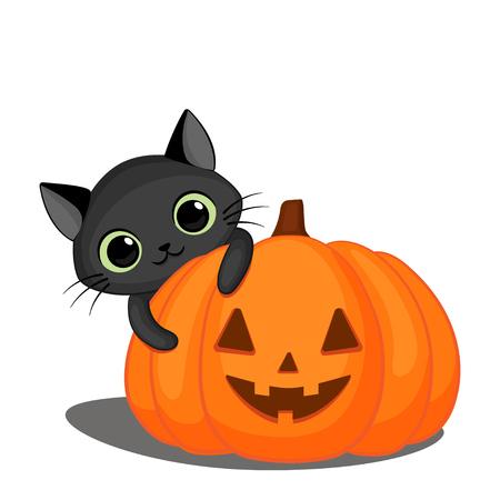 Cute black cat behind a Halloween pumpkin