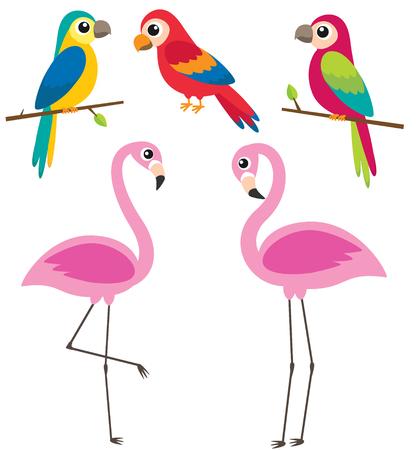 Cute cartoon parrots and flamingos on white background. Vector illustration Ilustração