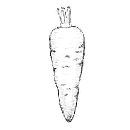 Carrot hand-drawn  Vector illustration
