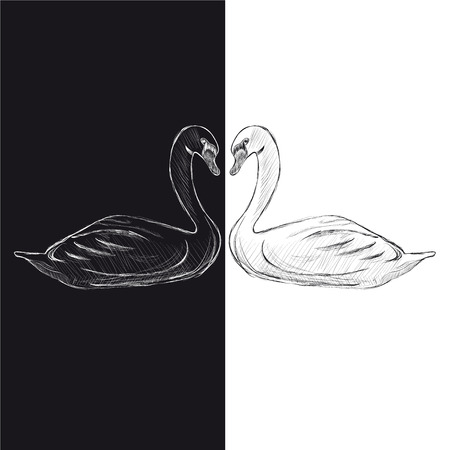 Pair of swans  Black and white  Vector